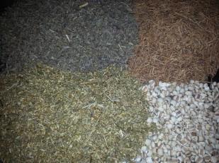 Copy of herbsforsweat